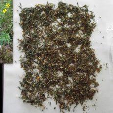 Heimia Salicifolia Sinicuichi Sun Opener Dried Herb