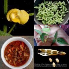 Vigna Aconitifolia Matki Indian Moth Bean Seeds