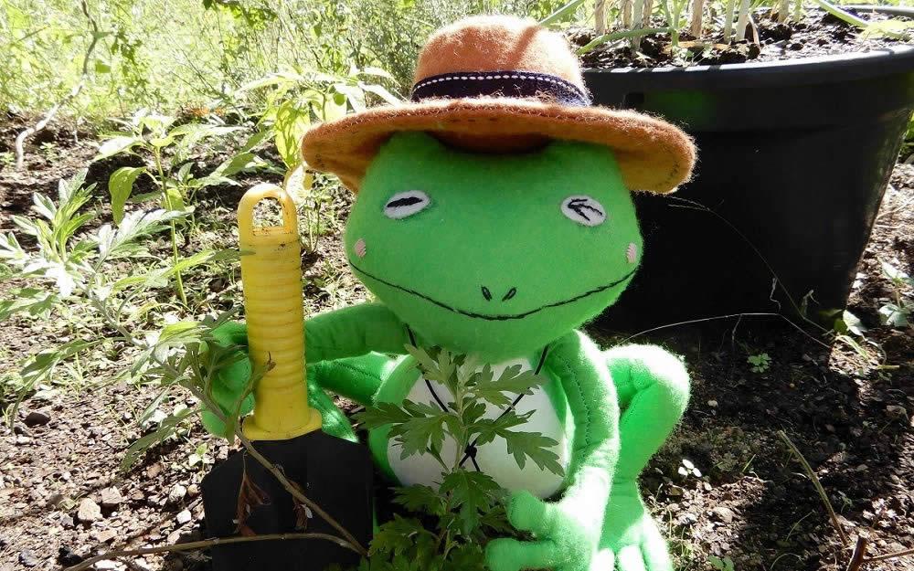 Aussie Seeds Online