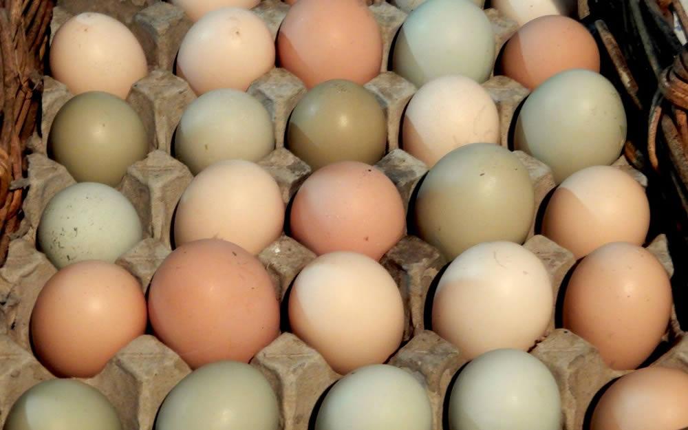 Easter Egger Coloured Eggs Online